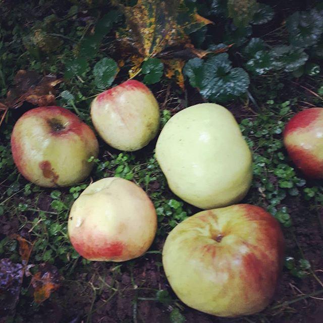 Meine-eigenen-Bio-Äpfel